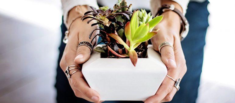 Empfehlenswerte Geschenke für Pflanzenliebhaber