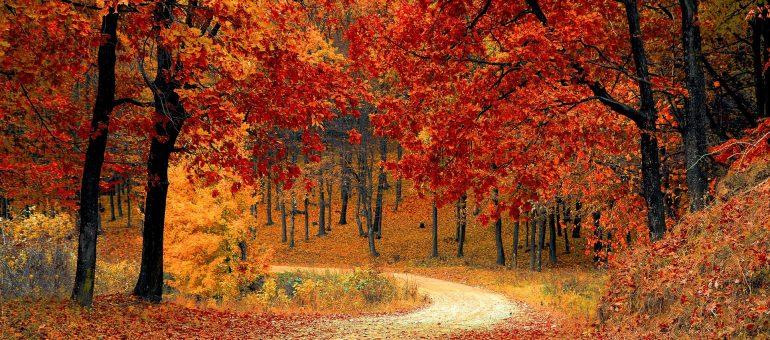 Herbstdeko - Geschenke für Personen, die es bunt mögen