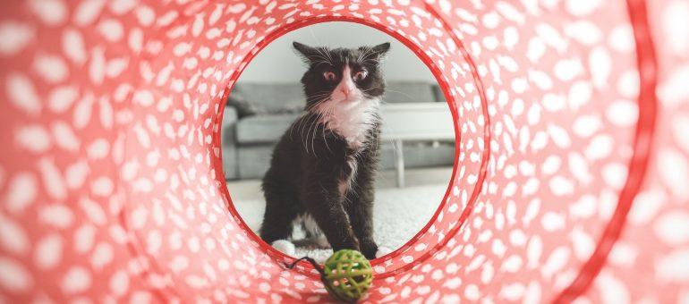 Süße Geschenke für Hunde & Katzen und Tierverliebte