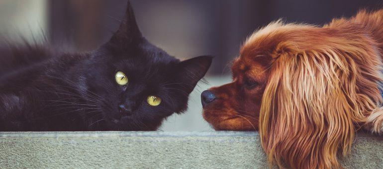 Geschenke für das Haustier