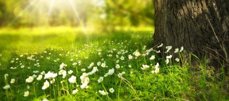 Umweltbewusste Artikel für den Alltag
