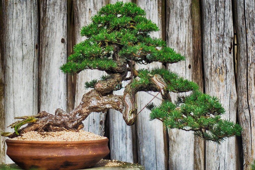 Hochzeitsbaum verschenken